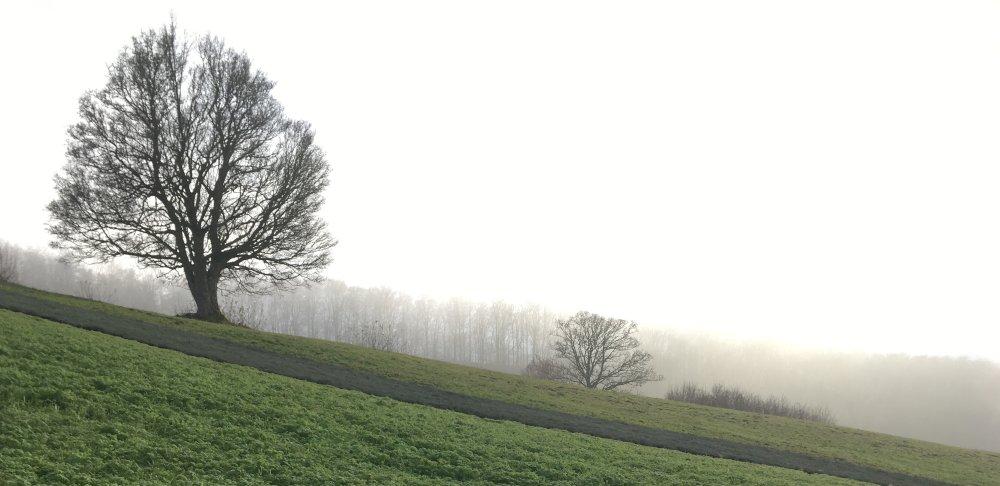 Feldahorn im Herbst