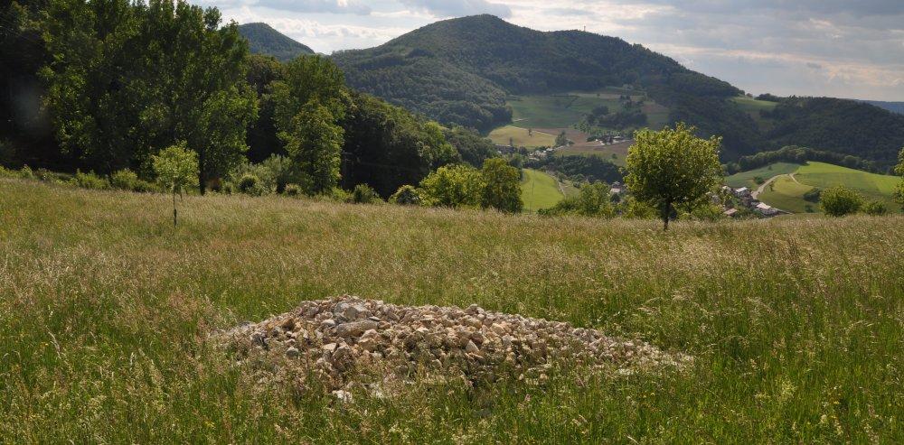 Steinhaufen Magerwiese